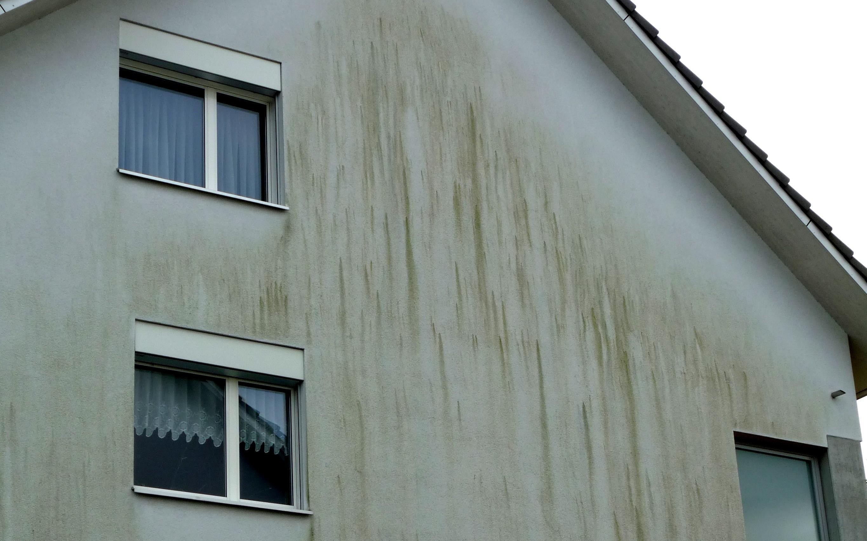 Algen und Pilze an Fassaden bekämpfen - hausinfo